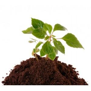 Грунт плодородный, земля чернозем, перегной